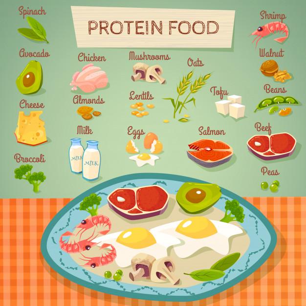 Proteiner och kolhydrater, en djungel – eller?